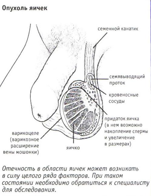sirie-yaytsa-uvelichivayut-spermu