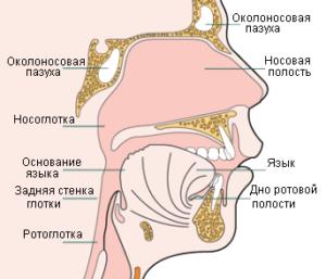 Рак носоглотки симптомы